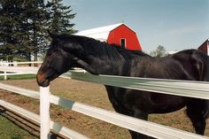 Horse in Flex