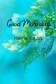 Good Morning Images Flowers, Good Morning Images Hd, Morning Greetings Quotes, Morning Quotes, Good Morning Letter, Hindi Books, Tv Live Online, Gd Mrng, Soulmate Love Quotes