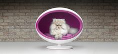 I want my cat to make this exact face as he sits in his Pod.