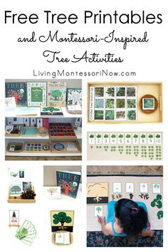 Free tree printables and Montessori-inspired tree activities for multiple ages; perfect for home or classroom; great for a tree unit, Earth Day unit, Arbor Day unit, or spring unit - Living Montessori Now #Montessori #homeschool #treetheme #freeprintables #preschool #kindergarten #botany #ArborDay