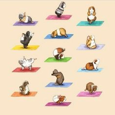 The Yoga Guinea Pigs Collection Art Print