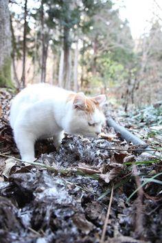 かご猫 Blog 霜柱