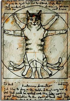 Vetruvius man thema - kat
