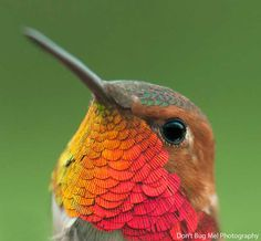 20 impresionantes acercamientos de colibríes revelan su inmensa belleza