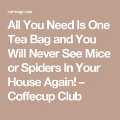 All You Need Is One Tea Bag and You Will Never See Mice or Spiders In Your House Again! – Coffecup Club