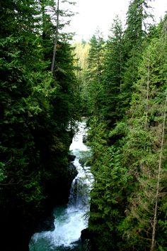 Lynn Canyon, Vancouver BC.