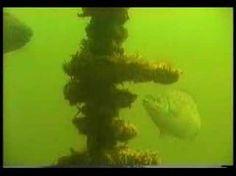 Jules Undersea Lodge 1988, Key Largo Florida
