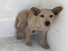 A1646407 - URGENT - CITY OF LOS ANGELES SOUTH LA ANIMAL SHELTER in Los Angeles…
