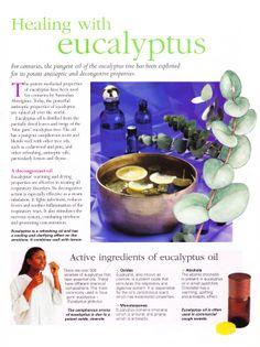 Healing with eucalyptus