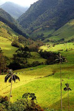 Valle de Cocora, salento, Colombia*