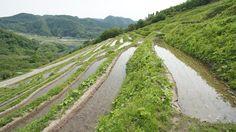 小倉千枚田 Full of small rice paddy - kosado