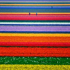 The Netherlands during tulip season! THOSE COLORS!
