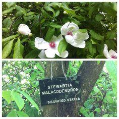 Unusual flowering tree
