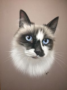 Pastel Portraits, Pet Portraits, Kittens Cutest, Cats And Kittens, Chats Image, All Types Of Cats, Cat Tattoo, Cat Drawing, Cute Funny Animals