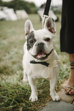 a ring bearer pup Photography by Wedding Artist Collective / http://theweddingac.com/