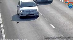 #Cat lover stops busy highway traffic to rescue stranded kitten - 9news.com.au: 9news.com.au Cat lover stops busy highway traffic to rescue…