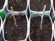 Como fazer estaquia Jade, Flower Gardening, Gardening Tips, Small Vegetable Gardens, Desert Rose, Nature, Plants, Greenhouse Gardening, Flowers