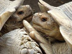 La Vallée des Tortues. Vine a Sureda, al sud de França, i coneix un parc zoològic... De tortugues! #sortirambnens