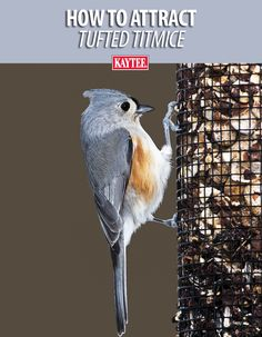 Use these feeders and the right seed to attract the tufted titmouse to your yard. Kaytee Wild Bird experts give backyard birding tips. Titmouse Bird, Bird Facts, California Backyard, Homemade Bird Feeders, Garden Animals, How To Attract Birds, Backyard Birds, Colorful Birds, Wild Birds