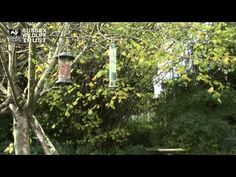 ▶ Bird Feeding Tips: cleaning and locations of feeders - YouTube