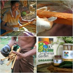 Ceylon Cinnamon, the best on earth. Our Lankafair project supports Sri Lanka farmers for there future with hope.