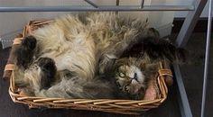 Haven't got a box? A basket will do. :)