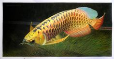 Scleropages Formosus high quality hand-painted by PaintingMania Beautiful Fish, Animals Beautiful, Live Fish For Sale, Betta Fish Types, Dragon Fish, Giant Fish, Fish Care, Exotic Fish, Aquarium Fish Tank