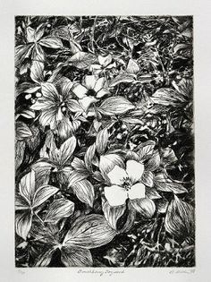 Drypoint etching study of forest flora