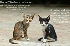 The sad reality of not spaying or neutering your cats! It's your responsibility to do this and it's the right thing to do!