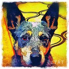 Custom Digital Pet Portrait by Artist BZTAT. More at: www.bztatstudios.com.