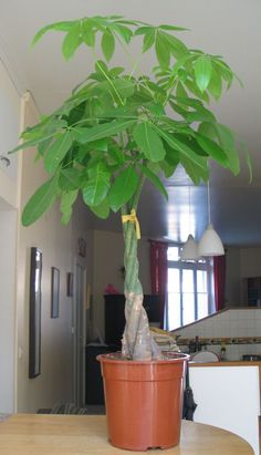 el econo es un pequeo invernadero para plantas o rboles en maceta que condensa el agua que se evapora de la tierra por la accin del sol optimiu