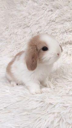 Jak go nazwać? Tiny Baby Animals, Baby Animals Super Cute, Cute Baby Dogs, Cute Baby Bunnies, Baby Animals Pictures, Fluffy Animals, Cute Dogs And Puppies, Cute Little Animals, Cute Animal Pictures