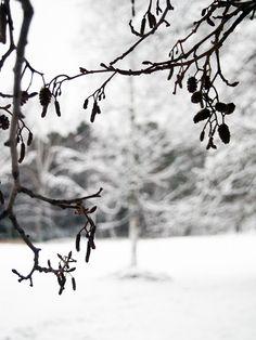 Stil Inspiration - Page 75 of 198 - Start Of Winter, I Love Winter, Winter Colors, Winter Is Coming, Winter Time, Long Winter, Black Christmas, Winter Christmas, Winter's Tale