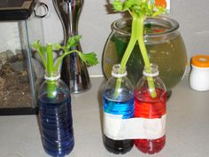 Science Week 9 Stem experiment with colored water and celery Science Week, Third Grade Science, Science Activities For Kids, Preschool Science, Elementary Science, Science Classroom, Science Fair, Teaching Science, Science Education
