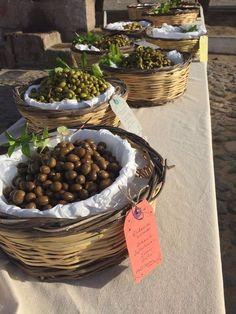 Slow Olive gathering in Ayvalık
