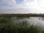 parque natural el hondo - Buscar con Google