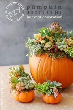 34 Pumpkin Decorations For Fall - Pumpkin Succulent Harvest Decoration - Easy DIY Pumpkin Decor Ideas for Home, Yard, Outdoors - Cool Pumpkin Decorating Ideas for Adults and Kids Party, Creative Crafts With Paint, Glitter and No Carve Projects for Hallowe Pumpkin Centerpieces, Thanksgiving Centerpieces, Centerpiece Ideas, Thanksgiving Ideas, Pumpkin Table Decorations, Pumpkin Arrangements, Harvest Party Decorations, Diy Thanksgiving Decorations, Succulent Decorations