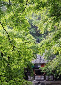桜井市 長谷寺 石段 新緑 : 魅せられて大和路