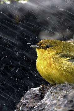 .RAIN, RAIN, GO AWAY !