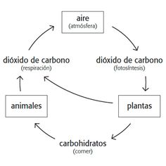This free climate change lesson plan will walk your students through the basics of climate change using the rainforests of Guat 7th Grade Science, Middle School Science, Nutrient Cycle, Carbon Cycle, Science Projects, School Projects, Environmental Education, Respiratory System, Photosynthesis