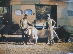 It isn't often you get a picture of a lion and a puma together South West Africa, Caprivi Strip South African Flag, Tactical Survival, Tactical Gear, Military Insignia, Defence Force, West Africa, Special Forces, Military History, Cold War