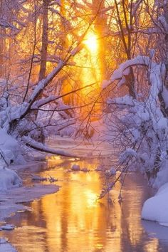 'Serenity' - winter light penetrating woods surrounding small flowing creek, Alaska