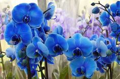 Here are the world's 25 Most Beautiful Types Of Blue Flowers You Haven't Seen Before..click this: http://magazine8.com/most-beautiful-types-of-blue-flowers/