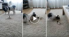 Como Um Rato e Um Cão Conseguem Conviver Em Perfeita Harmonia Dentro Da Mesma Casa http://www.funco.biz/um-rato-um-cao-conseguem-conviver-perfeita-harmonia-da-mesma-casa/