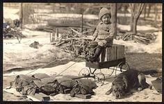 vintage dog pictures | Pitbulls: The Nanny Dog « Animal Advocates Alliance Animal Advocates ...