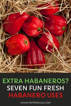 Habanero peppers were once considered some of the hottest peppers in the world. These chilies acquired their notoriety long before the rise of the super-hots like the ghost pepper and the Carolina Reaper came around. Habanero chilies are nowhere near as hot as today's hottest peppers but they are still plenty spicy. #habanero #chilies #spicy #peppers
