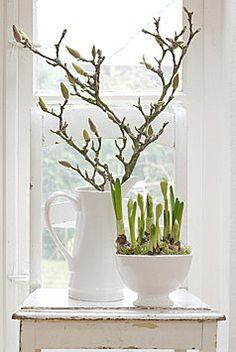 white greening - magnolia - bulbs