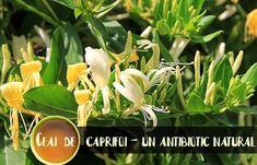 Natural Health Remedies, Plant