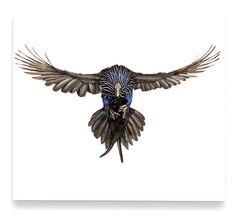 """""""Vulturine Guineafowl"""" by ANDREW ZUCKERMAN."""