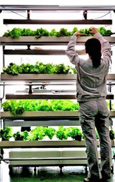 Urban Farming, future food, Daiwa House, Agri-Unit, Japan, organic, prefabricated hydroponic vegetable factories, solar panels